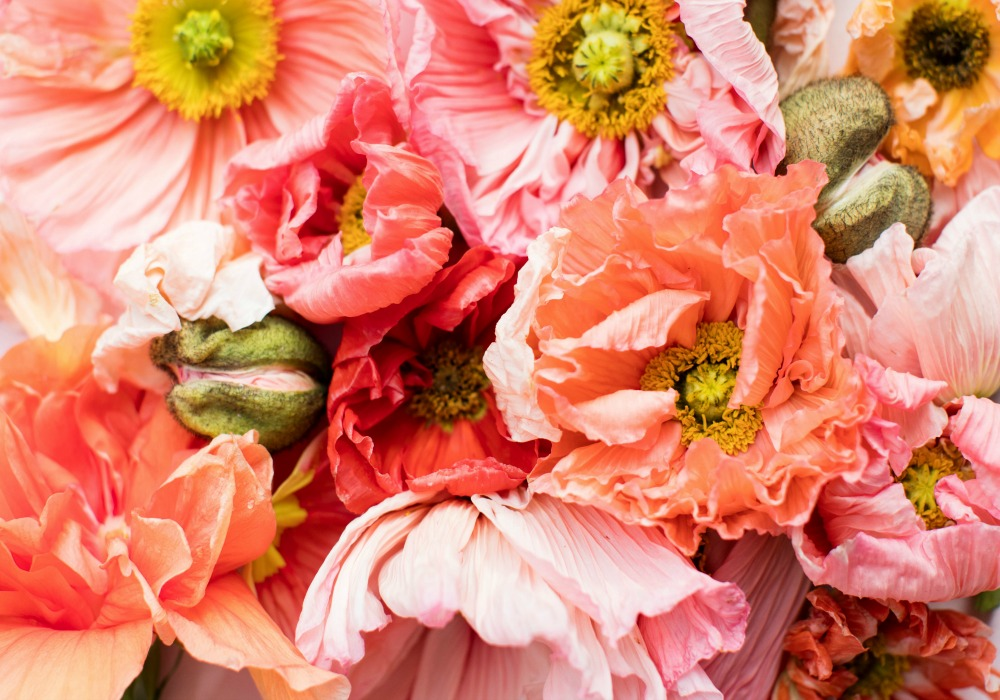 Flower Floral Supply In The United States We Love Florists A