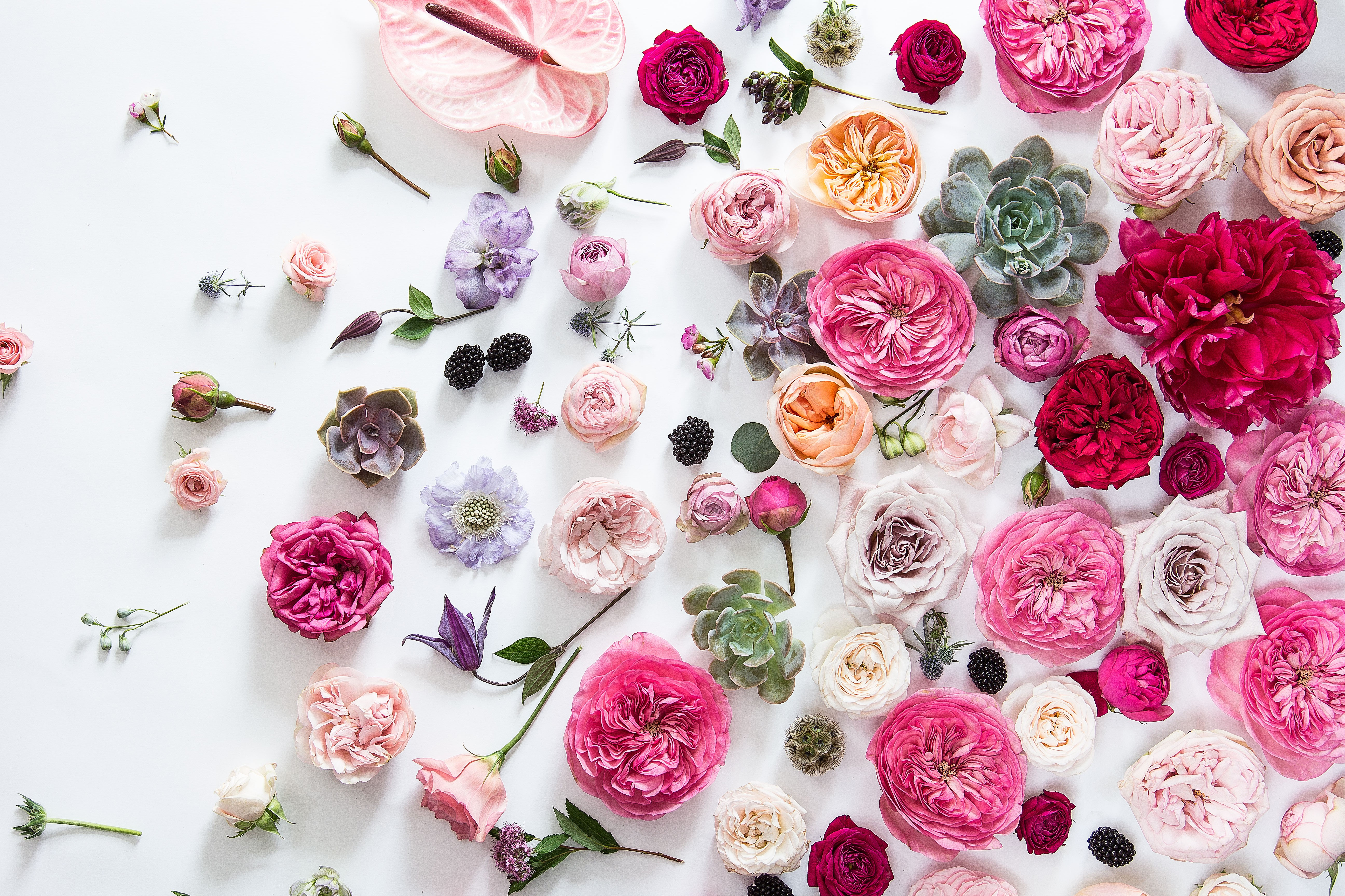 Floral Wire Delivery Service