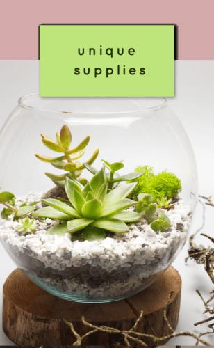 Succulent bar supplies