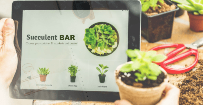 Website Succulent Bar