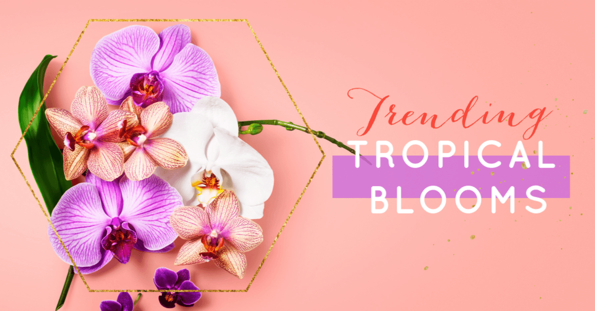 Trending tropical blooms
